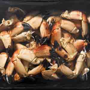 Crab Claws Pack