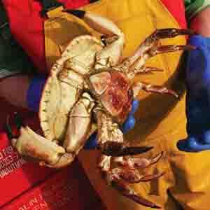Holding Crab